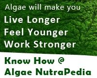 algaesidebar